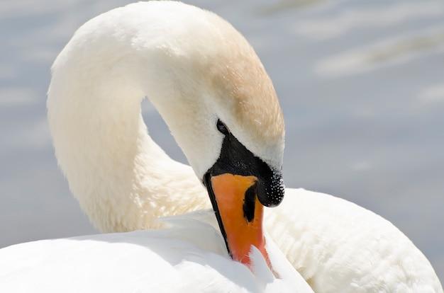 Лебедь на зимнем пейзаже
