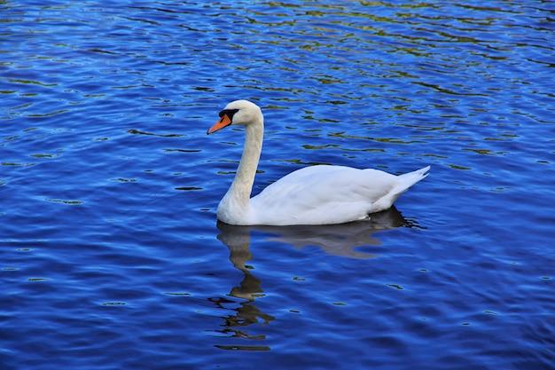The swan in potsdam park, germany