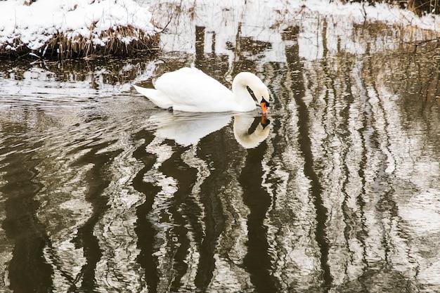 スノー湖の海岸で泳いで雪