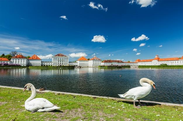 Лебеди в саду возле дворца нимфенбург