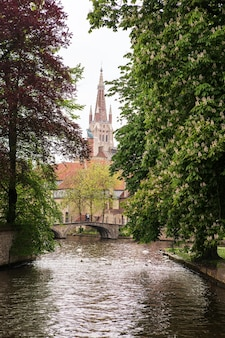 Swans on the lake of love in bruges, belgium