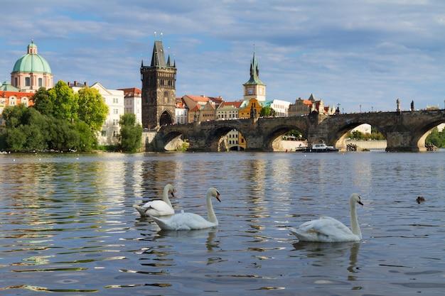 Лебеди на фоне карлова моста через реку влтава, прага, чехия