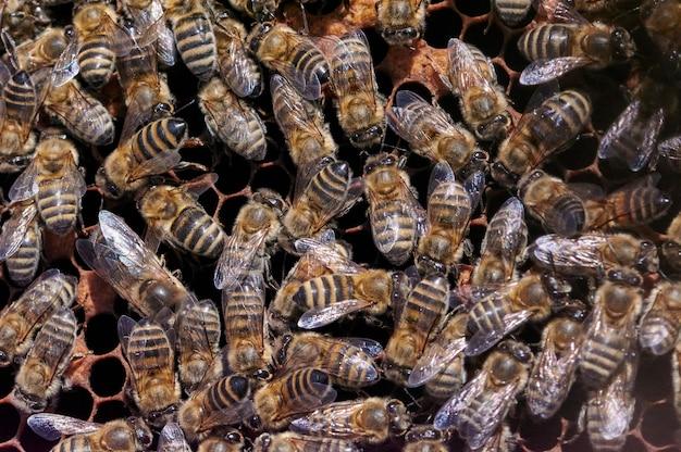 벌집에 꿀벌 떼