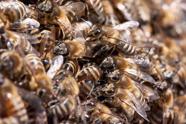 벌집에 꿀벌 떼 프리미엄 사진