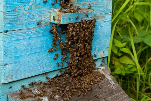巣箱に溜まった群がる蜂