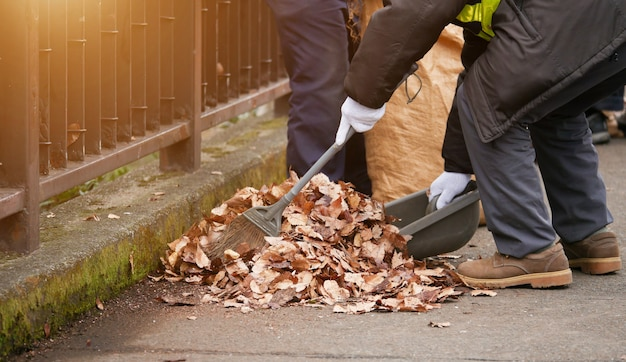 Sweeping dry leaves with broom
