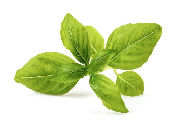 Сладкий базилик brach зеленые листья, изолированные на белом.