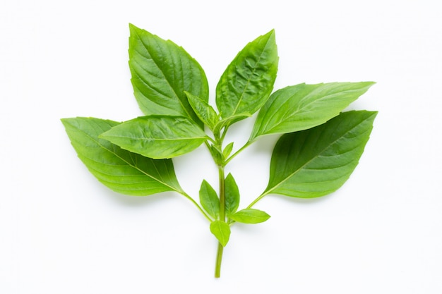 Sweet basil leaves on white.
