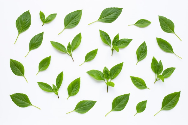 Sweet basil leaves on white