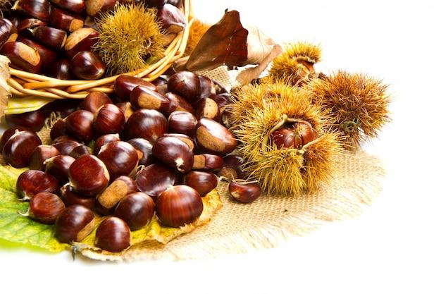 Sweet chestnut on white background.