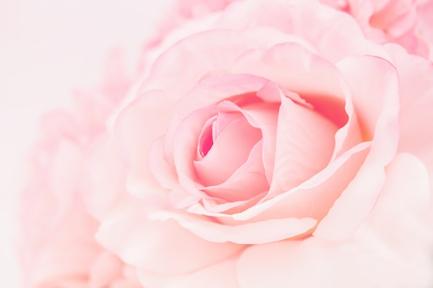 Сладкие розовые розы с градиентом в мягком стиле для абстрактного фона