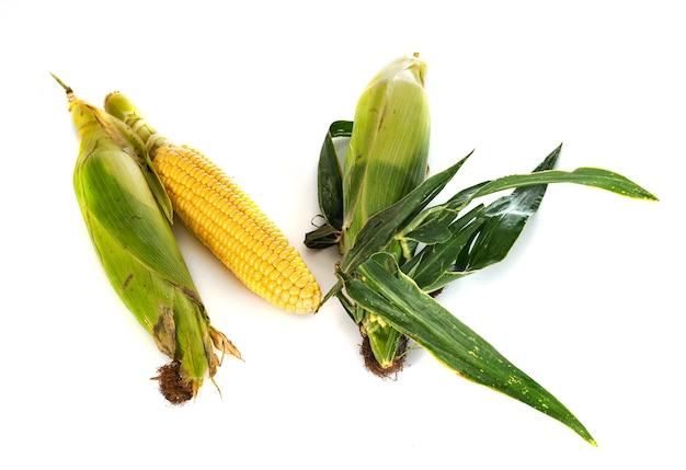 Сладкая кукуруза на белом фоне