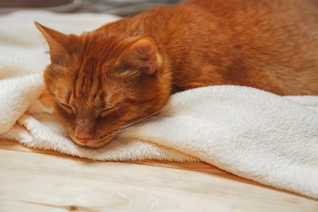 Sweet ginger cat sleeping on a fluffy blanket