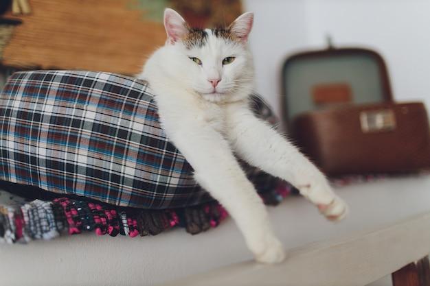 달콤한 황금 고양이 소파에 누워 멀리보고.