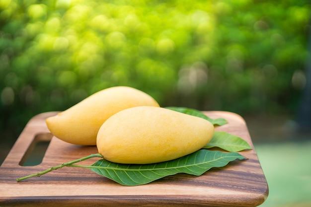 Sweet golden mango on green garden.barracuda mango with green leaf.