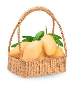 Sweet golden mango isolated on white.barracuda mango.