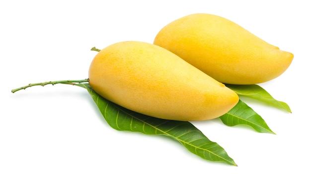 Sweet golden mango isolated on whitebarracuda mango.