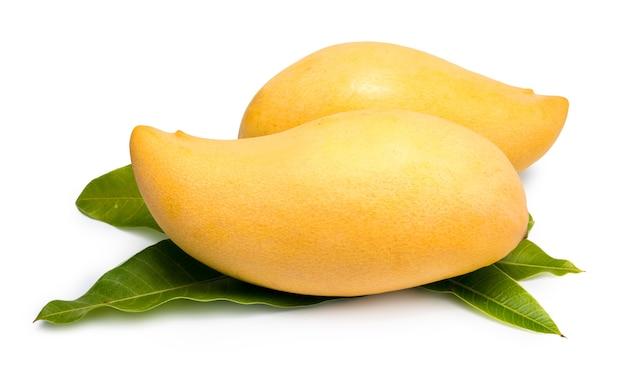 Sweet golden mangoes isolated on white barracuda mango on white.