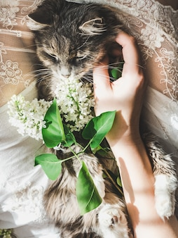 Sweet kitten and beautiful sprig of lilac