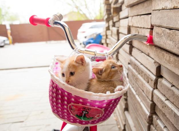 自転車のかごの中の甘い子猫