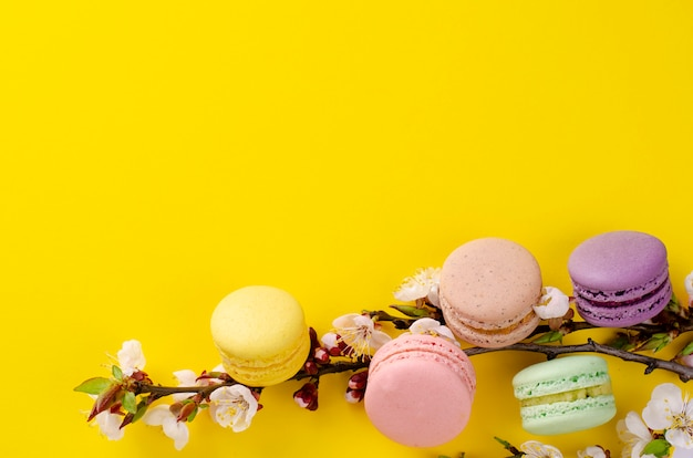Sweet macarons or macaroons decorated with blooming apricot flowers on bright yellow