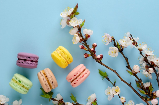 Sweet macarons or macaroons decorated with blooming apricot flowers on pastel blue