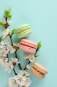 Sweet macarons or macaroons decorated with blooming apricot flowers on pastel mint