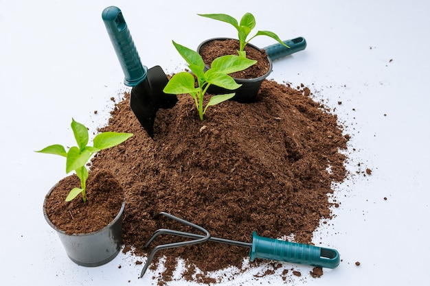Sweet paprika seedlings in a plastic pot and a pile of fertile land on a white background