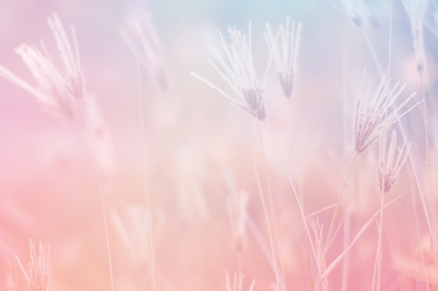 Sweet and pastel color  flower ,soft and blurry focus photo in vintage style