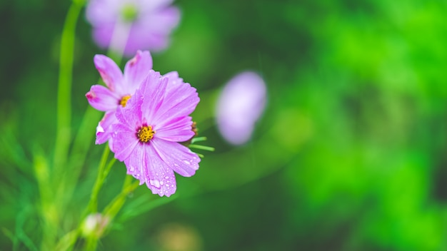 Sweet pastel purple flower blossom