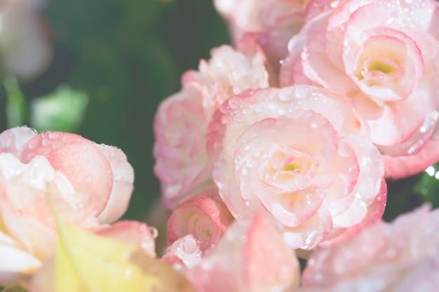 甘いピンクの花と水滴の背景