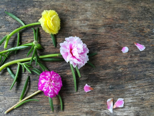 Sweet pink yellow moss rose with petal flower are beautiful on wooden background.