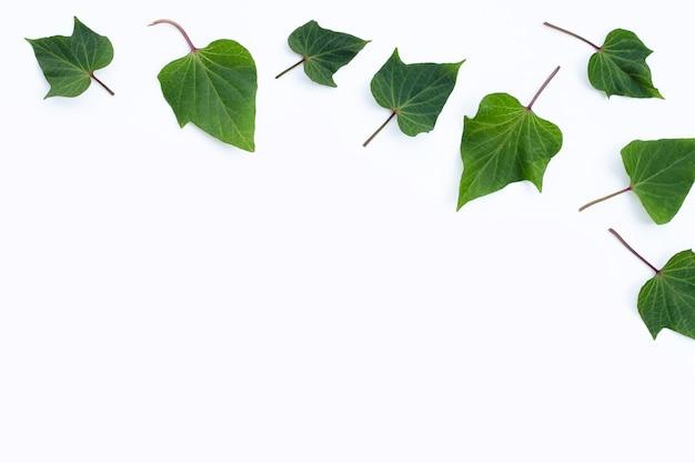 고구마는 흰색 바탕에 나뭇잎.
