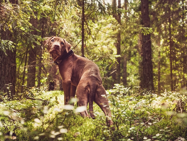 Sweet puppy in a beautiful forest