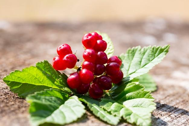 Сладкие красные и спелые ягоды ежевики в летней природе rubus saxatilis