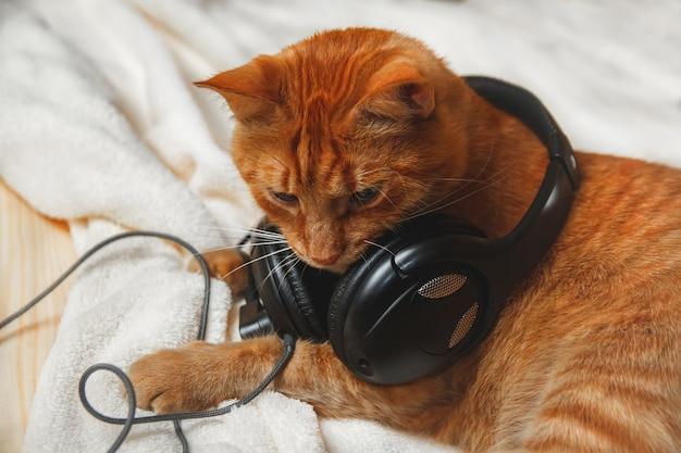 ヘッドフォンで音楽を聴いている甘い赤い猫