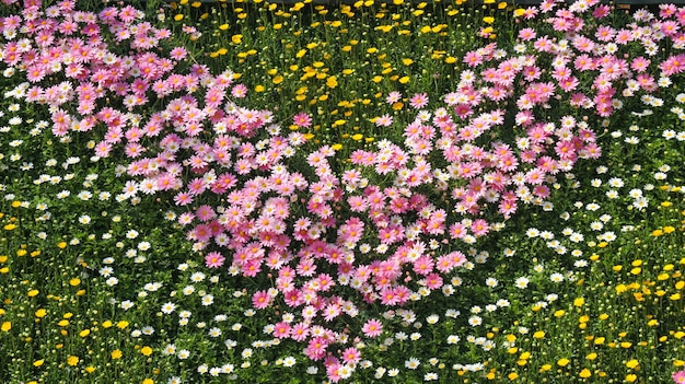 Sweet several color daisy flowers design field garden background.