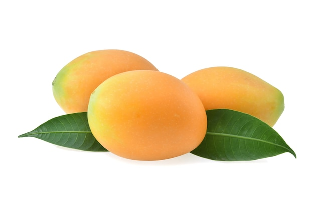 Sweet yellow marian plum with leaves isolated on white background.
