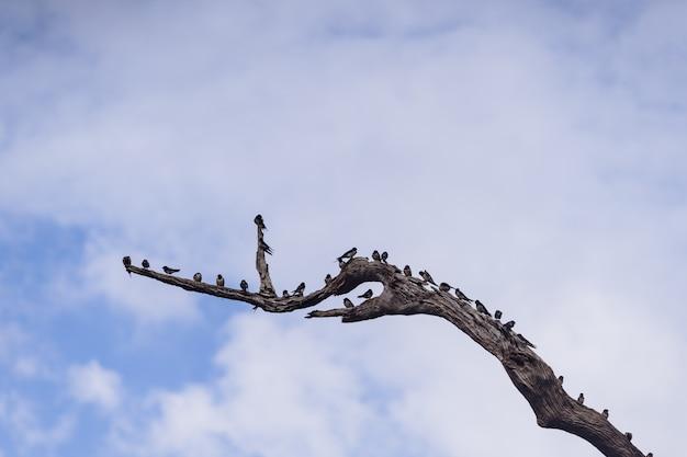 Птица мухомора на высушенных ветвях деревьев в заповеднике хала-бала