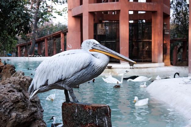 Плавать фон тропического белое кормление