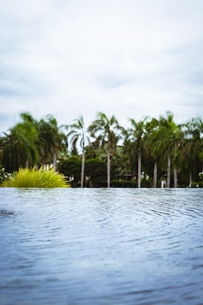 Swimming pool with coconut tree