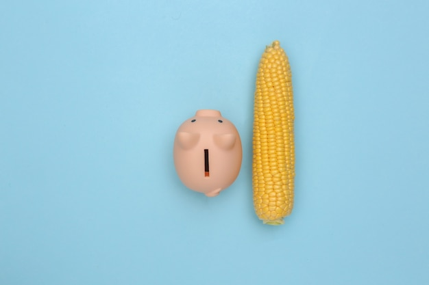 Swing of corn and piggy bank on  blue background. flat lay composition.