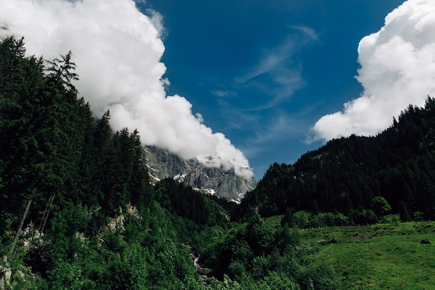 Swiss alps mountains. view of green forest and mountain in the clouds