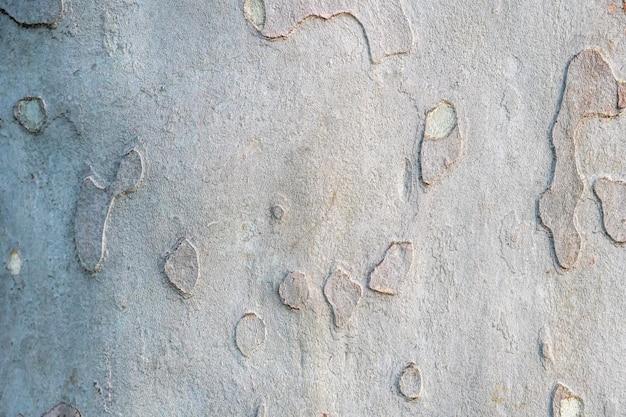 Sycamore platan or plane tree bark texture  khaki military pattern imitation