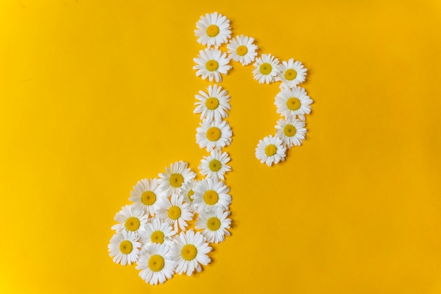 Symbol of musical notes from white daisies on a yellow background