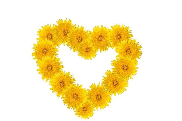 Символ любви, счастья, лета - формы сердца из желтых одуванчиков, изолированных на белом фоне. может использоваться как открытка на день матери, день святого валентина, день рождения, естественный фон, элемент дизайна