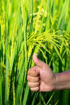 The symbol of one the rice seed in rice field show the yield good growth