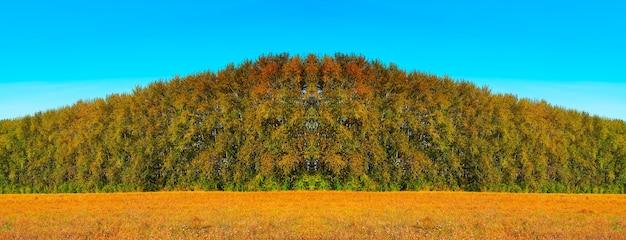 黄色の牧草地の自然の背景に対称的な秋の森