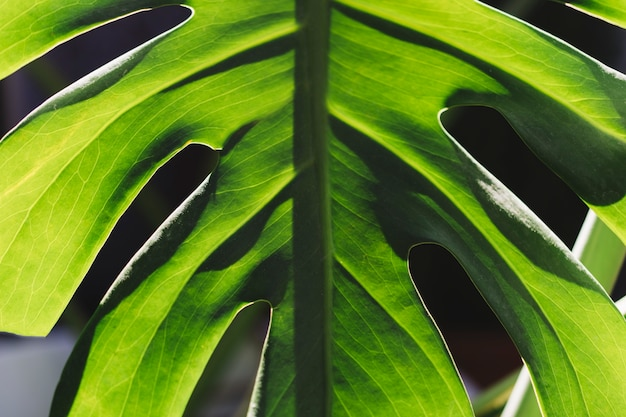 対称緑色の葉