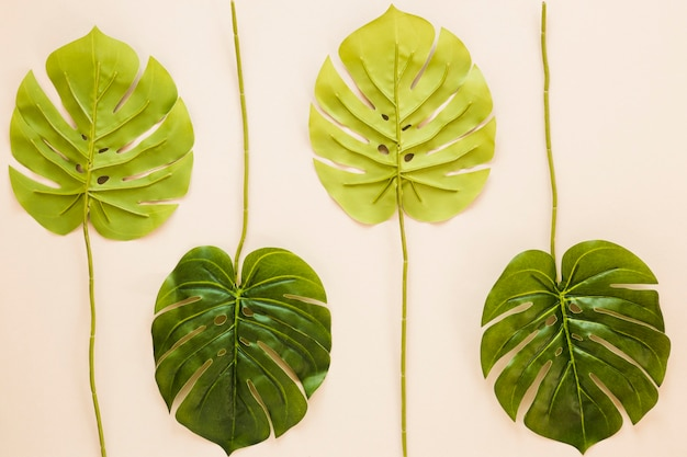 Symmetrical flat lay composition of leaves